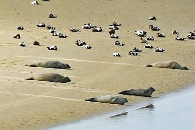 Seehunde und Seevögel auf einer Sandbank.