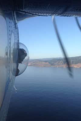Flugzählung von Kleinen Tümmlern, Kalifornien