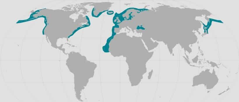 Weltkarte Lebensraum von Schweinswalen.