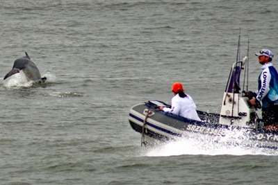 Südafrika: Hai- und Delfinschutz