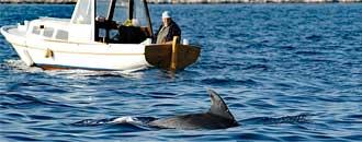 Verhaltenstipps Wale & Delfine