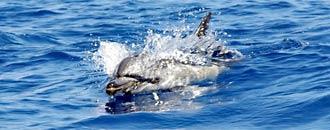 """Delfin """"Schwenteeny"""" aus Kiel verschwunden"""