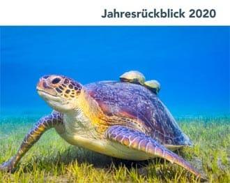 Jahresrückblick 2020 Deutsche Stiftung Meeresschutz (DSM)