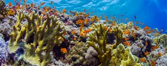 Schnelltest zur Korallengesundheit