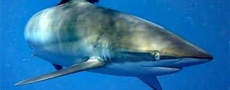 DSM-Förderungen Haischutzprojekte