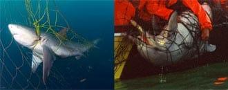 Todesfalle Hainetze