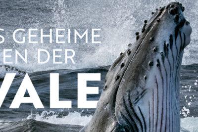 """Auschnitt Cover """"Das geheime Leben der Wale"""" von National Geographic."""