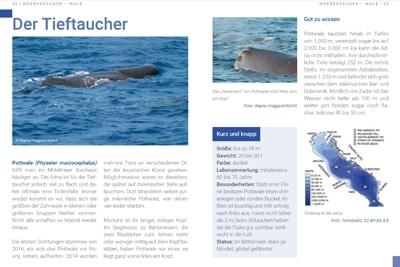 Seiten 22-23, Broschüre Bedrohte Artenvielfalt in der Adria.