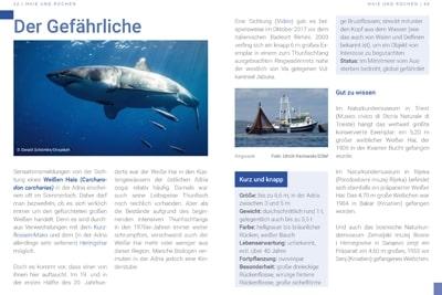 Seiten 42-43, Broschüre Bedrohte Artenvielfalt in der Adria.