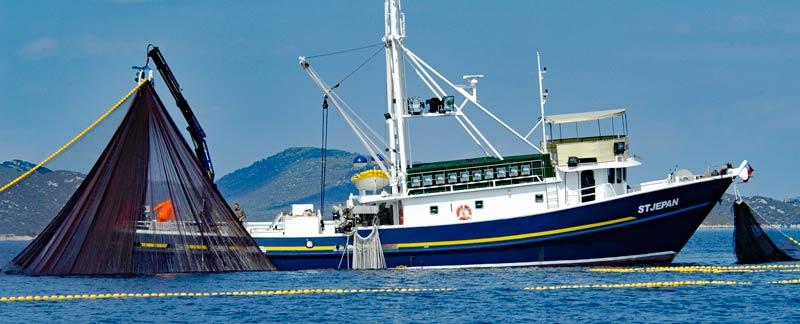 Überfischung in der EU bis 2020 beenden