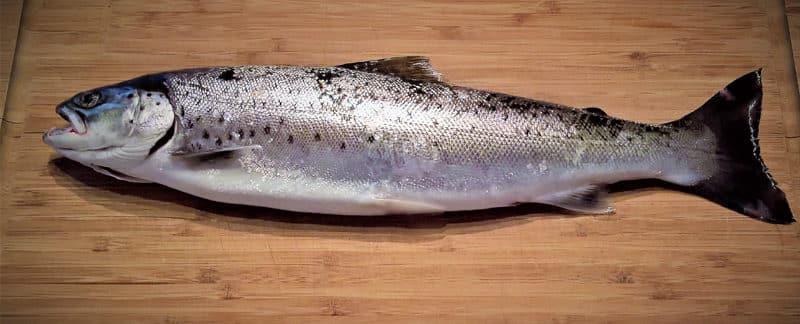 Ein Fisch auf dem Tisch.