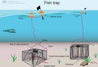 Nachhaltiger Fischfang mit Fischfallen.