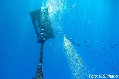 MSC zertifiziert FAD-Fischerei