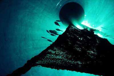 EU-Ringwadenfischerei mit FADs im Indischen Ozean