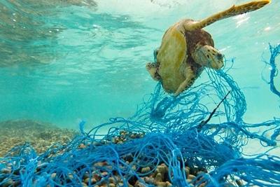 FAD-Fischerei im Indischen Ozean: Eine tote Meeresschildkroete hängt in einem Geisternetz.