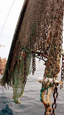 Grundschleppnetz wird an Bord geholt. Foto: Mike Markovina/Marine Photobank.