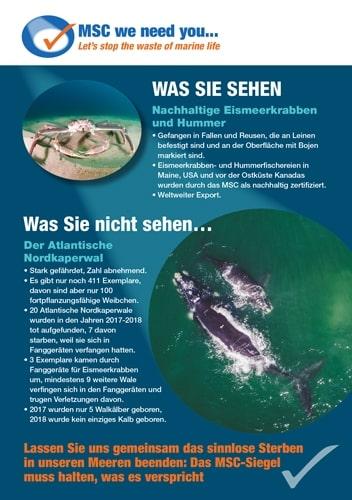 Lassen Sie uns gemeinsam das sinnlose Sterben in unseren Meeren beenden: Das MSC-Siegel muss halten, was es verspricht.