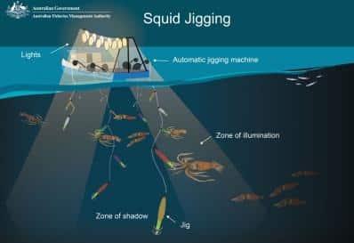 Nachhaltiger Fischfang: Jiggermaschine beim Fang von Tintenfisch.
