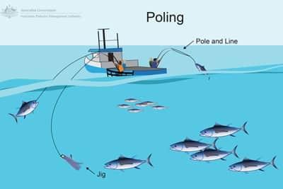 Nachhaltiger Fischfang mit Pole and Line.