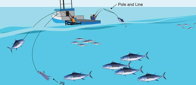 DSM-Förderungen – Nachhaltige Fischerei