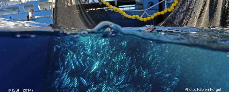 Delfintödlicher Thunfisch aus Mexiko