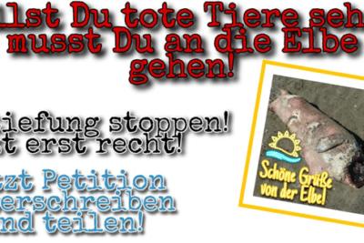 Petition gegen die Elbvertiefung: Willst du tote Tiere sehen, musst Du an die Elbe gehen!