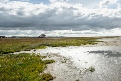 Salzwiesen an der Wattkante am Südstrand von St. Peter-Ording.