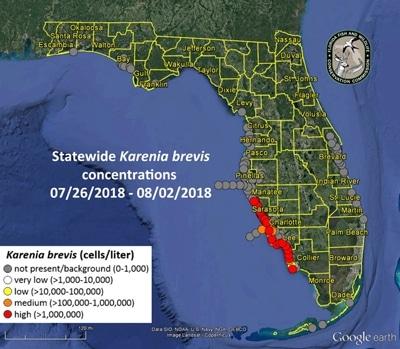 Karte Ausbreitung Karenia brevis vor Florida Juli-Augist 2018.