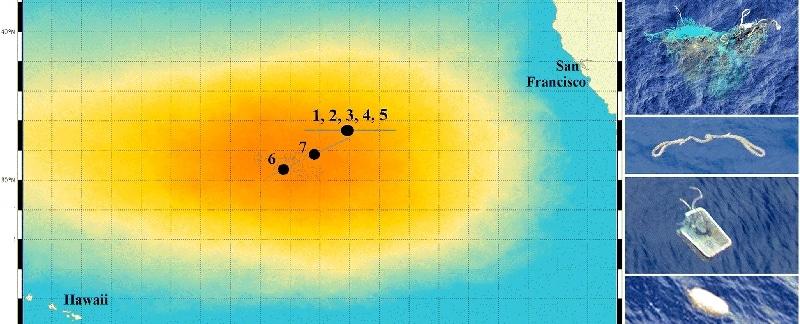 Sichtungen von Meeressäugern im Great Pacific Garbage Patch.