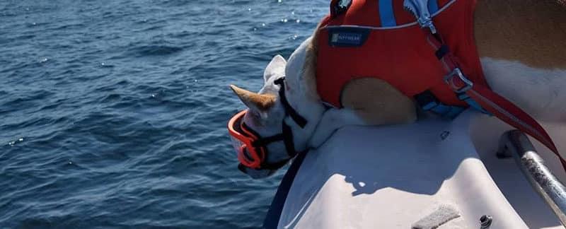 Orca-Hund Eba