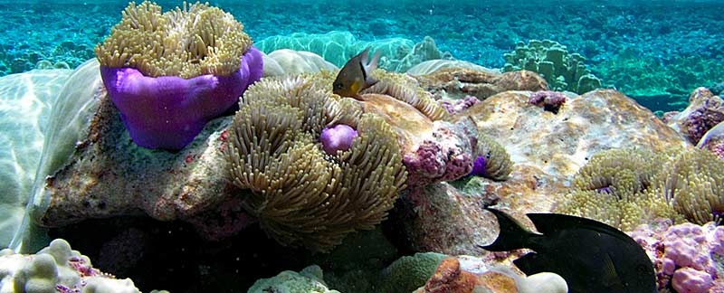 Pacific Remote Islands Marine National Monument