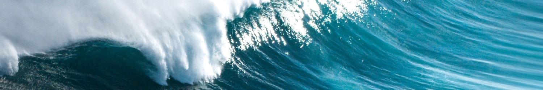 Spenden für den Meeresschutz