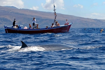 Whalewatchingboot mit einem Wal vor La Gomera.