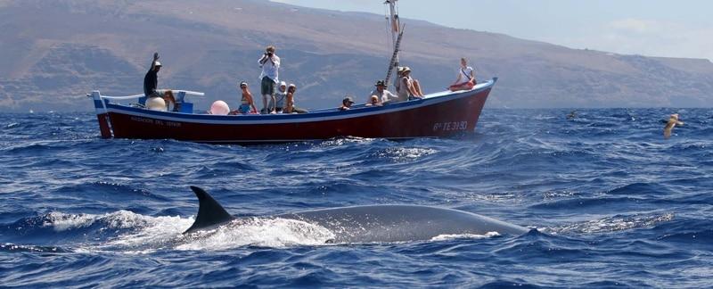 Whalewatching vor La Gomera