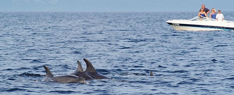 Delfinbeobachtung in der Adria.