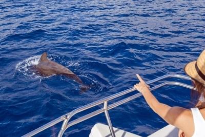 Delfinbeobachtung im Teno-Rasca Walschutzgebiet: ein Großer Tümmler taucht ab.