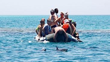 Touristen in einem Schlauchboot bedrängen Delfine vor Hurgahda im Roten Meer.