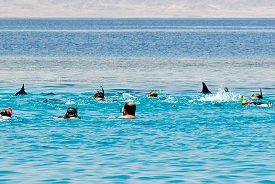 Touristen schwimmen auf ruhende Delfine zu.
