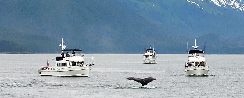 Whalewatching bei Alaska.