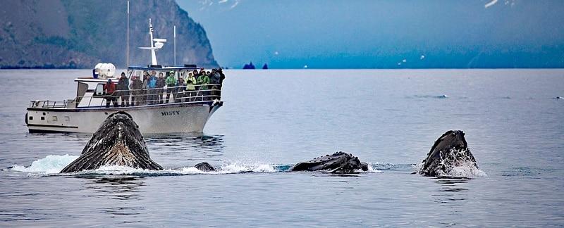 Whalewatching mit Buckelwalen.