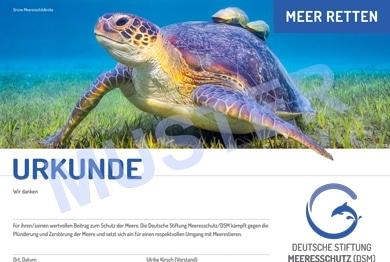 DSM-Spendenurkunde Schildkröte
