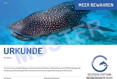 DSM-Spendenurkunde Walhai